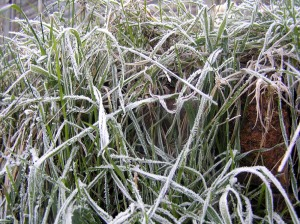 Frost on Grass Again
