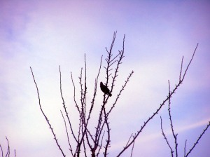 Birds feb 2006 004