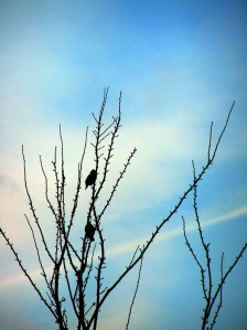 Birds feb 2006 002