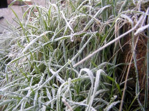 More Frost on Grass