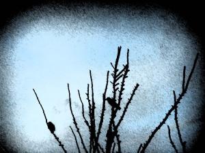 Birds feb 2006 003