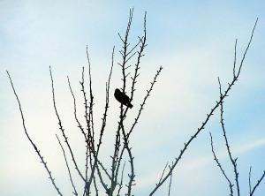Birds feb 2006 005