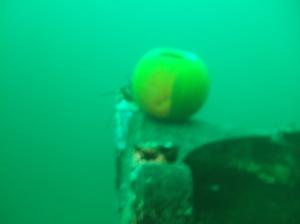 Underwater Pumpkin 1
